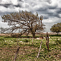 Wind Swept Kansas Tree by Jim Finch
