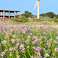Wind Turbine And Flowers by Gynt