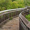 Winding Boardwalk by JG Coleman