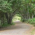 Winding Country Road by John Orsbun