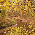 Winding Creek by Matt Taylor