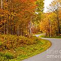 Winding Fall Road by Lori Sulger