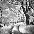 Winding Journey Through The Blue Ridge by Dan Carmichael