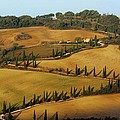 Winding Road And Cypress Trees In Tuscany 1 by Greg Matchick