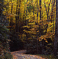 Winding Road - Fall Color by Harold Rau
