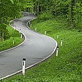 Winding Road In The Woods by Chevy Fleet