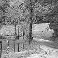 Winding Road In Wilderness Black And White by Sherri Duncan