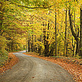 Winding Rural Road With Fall Colors by Vikas Garg