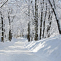 Winding Snowy Road In Winter by Donna Doherty
