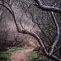 Winding Trail by Karen Saunders