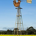 Windmill In A Canola Field by Science Photo Library