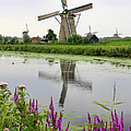 Windmills Of Kinderdijk With Flowers by Carol Groenen