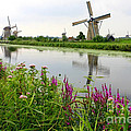 Windmills Of Kinderdijk With Wildflowers by Carol Groenen