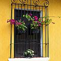 Window At Old Antigua by Kurt Van Wagner