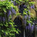 Window Behind Wisteria by Christine Czernin-Morzin