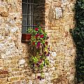 Window Box by Timothy Hacker