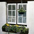 Window Box by Tom Wooldridge