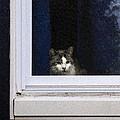 Window Cat by David Stone