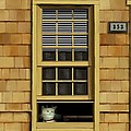 Window Cat    No.1 by Diane Strain