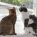 Window Cats by Michelle Powell