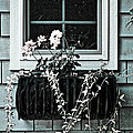 Window Dresser by Bonnie Bruno