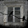 Window Dressing by Gothicrow Images
