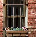 Window Dressing by Liane Wright