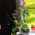 Window Geranium by Alexandra Kopp