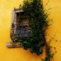 Window In Florence by Caroline Stella