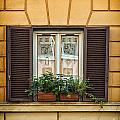 Window In Rome by Sophie McAulay