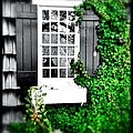 Window by Julia Gatti