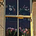 Window Of The Cotswolds by Elvis Vaughn