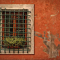Window Of Vernazza Italy Dsc02633 by Greg Kluempers
