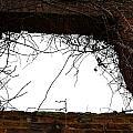 Window Through Time by Tara Potts