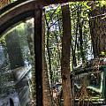 Window To A Window Via Tree by Douglas Barnett