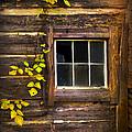 Window To The Soul by Debra and Dave Vanderlaan