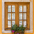 Window With Flowers by Paulo Goncalves