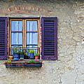 Window With Potted Plants Of Rural Tuscany by David Letts