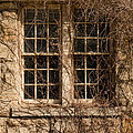 Windows And Weeds by Vick Laney