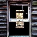 Windows by Carlee Ojeda