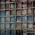 Windows by Karen Adams