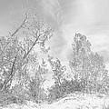 Windswept by Ann Horn