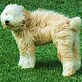 Windswept Dog by Vijay Sharon Govender