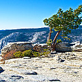 Windswept Tree On Top Of Sentinel Dome In Yosemite Np-ca by Ruth Hager