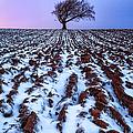 Windswept Tree Scotland by John Farnan