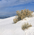 Windswept - White Sands National Monument by Sandra Bronstein