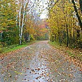 Windy And Rainy Fall Day by Sherman Perry