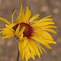 Windy Flower by Gregory Yost