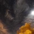 Windy Night by Angela J Wright