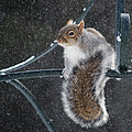 Windy Winter Day by Jeff Galbraith